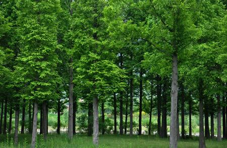 林业调查规划设计单位资格认证管理办法